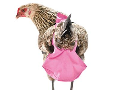 chicken-diaper.jpg