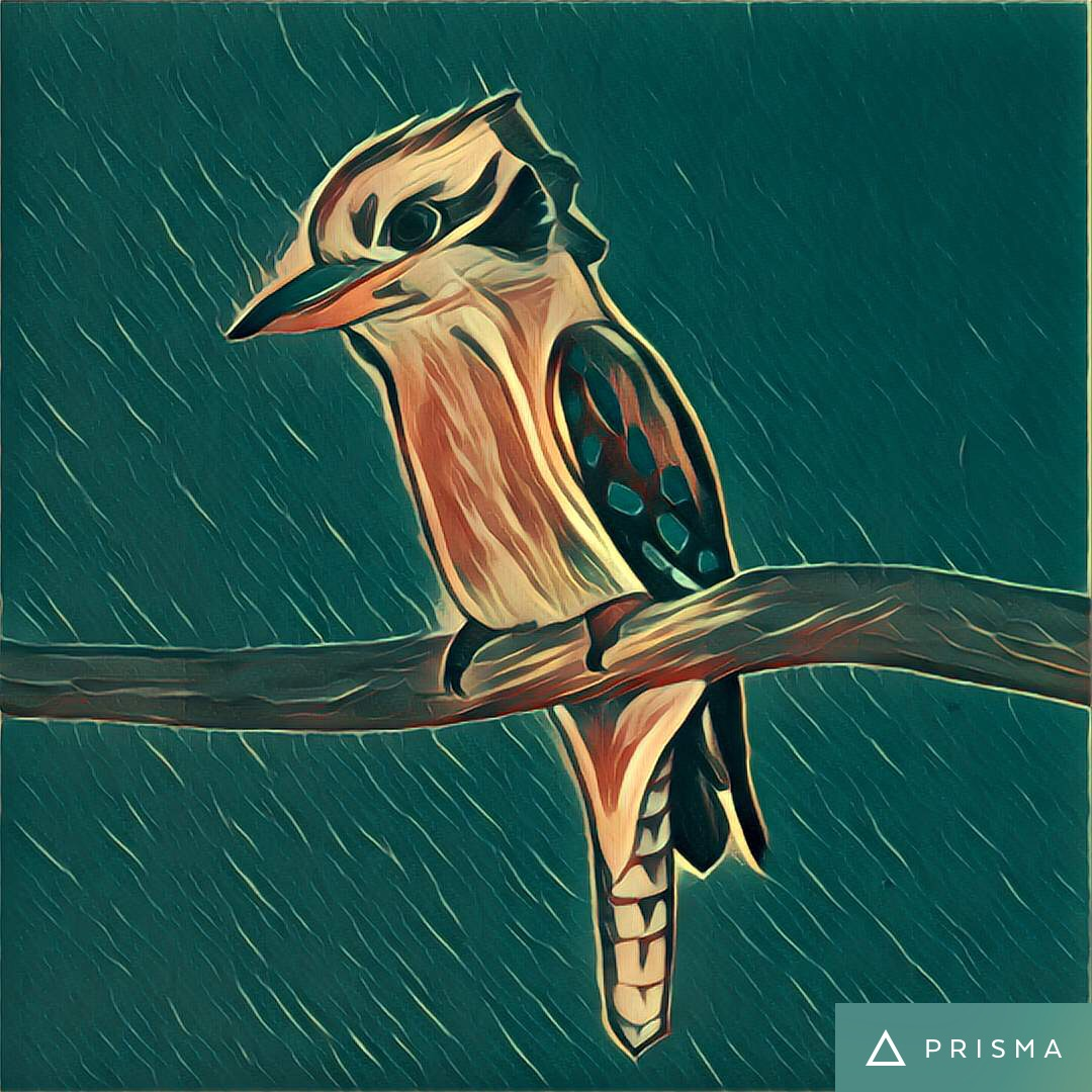 KookaburraPrisma.JPG