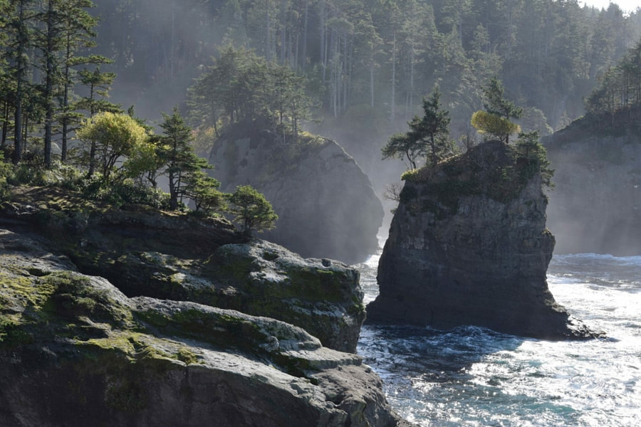 Wild Washington Coast