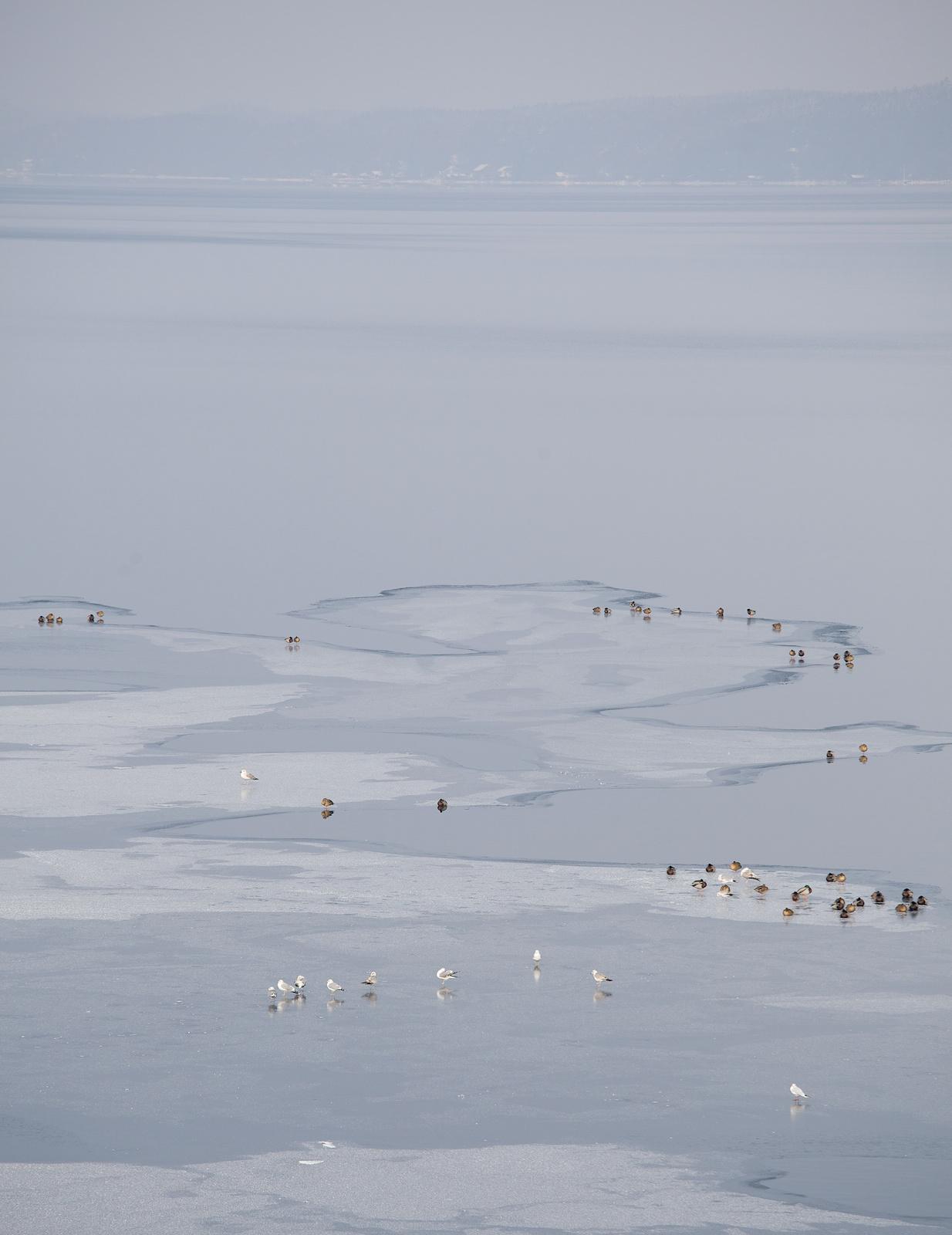 Wasservögel Eis Seeshaupt 31.02 - Arbeitskopie 2.jpg
