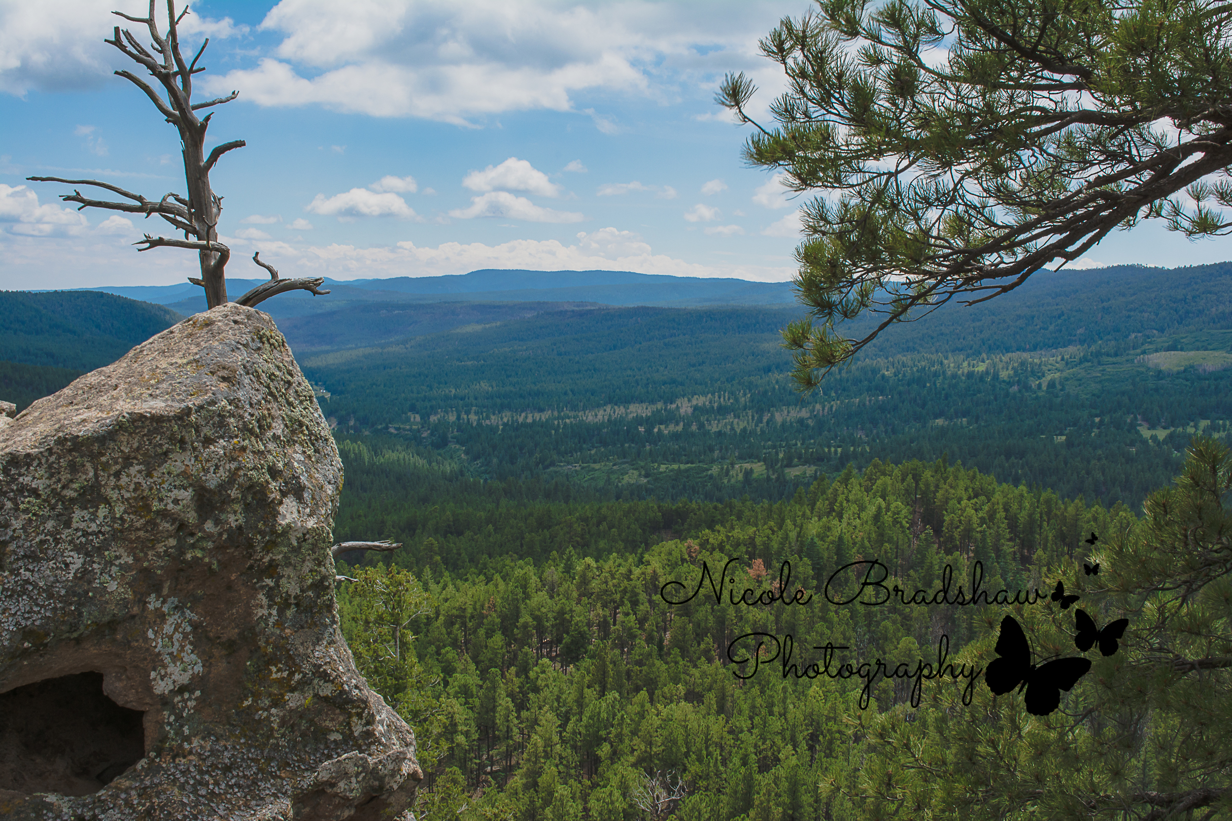 Girl-Scouts-of-New-Mexico-Trails