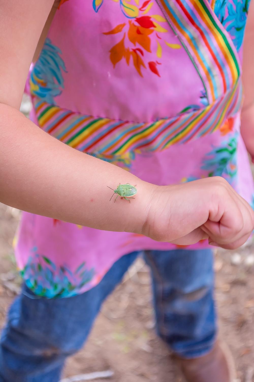 Childhood Interests, Bug Photo, Outdoor Family Photos, Santa Fe Family Photographer, Portrait Photographer