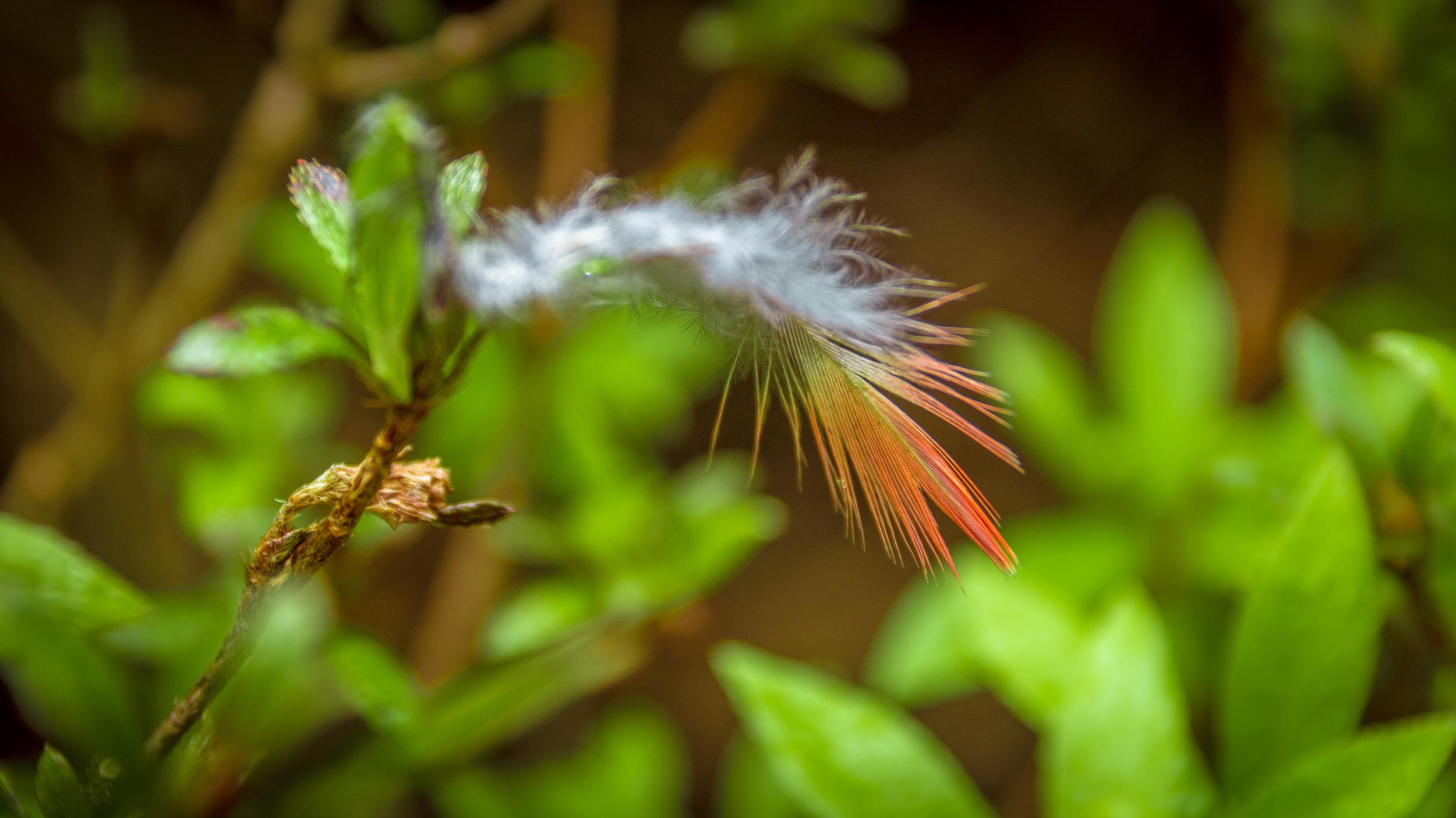 Blog - Blue Mountains - Everglades House and Gardens-5.jpg