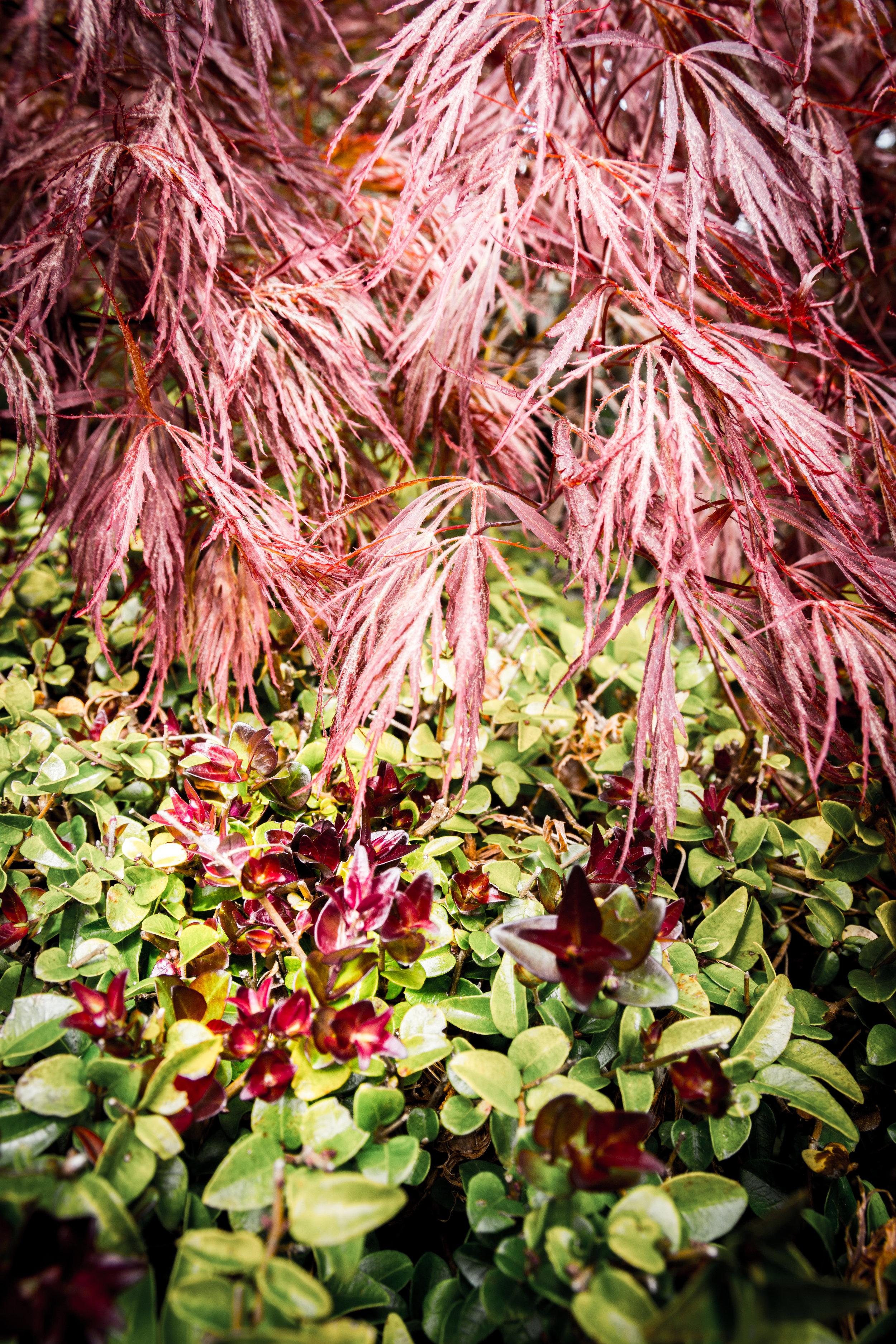 Blog - Blue Mountains - Everglades House and Gardens-7.jpg