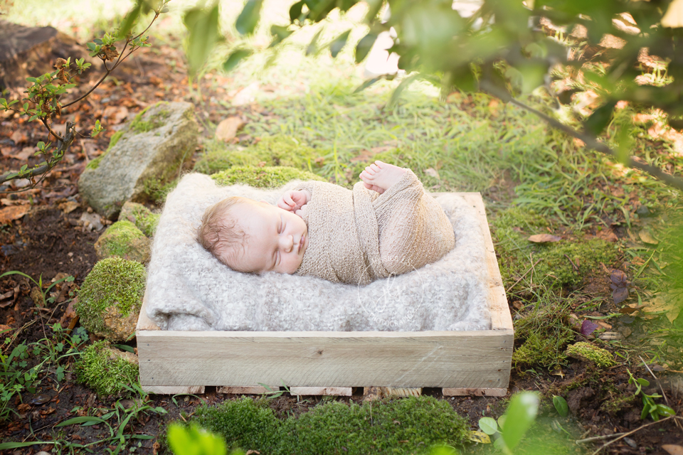 Mom was determined to have an outdoor session with this little baby boy. I was so super excited to use little spots throughout my yard to put him in also! He loved being wrapped tight and in the end he posed beautifully on a log stump in my front yard too!