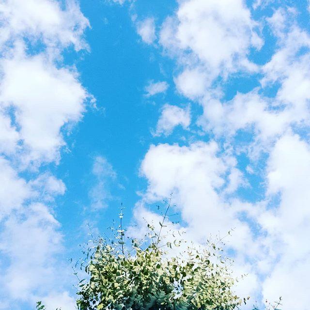#anotherbeautifulday #bluesky #nicegreen #clouds #tree #studio #morning #photographoftheday #refreshing #startingday
