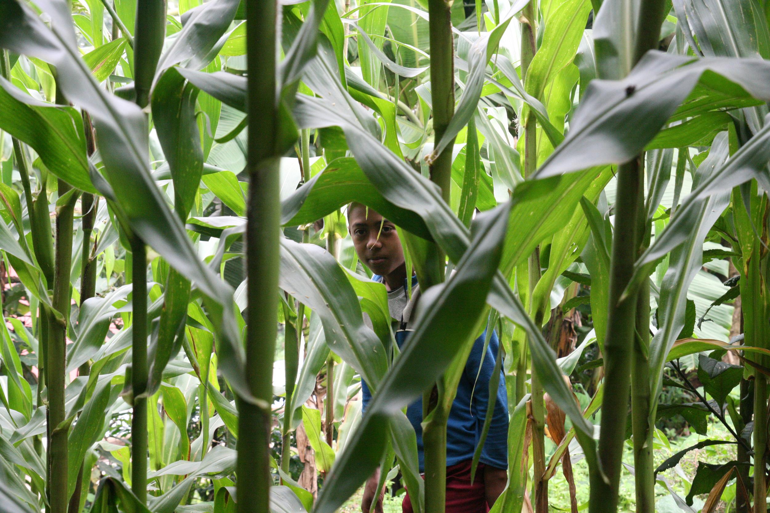 Abiyu Hiding In The Maize.jpg