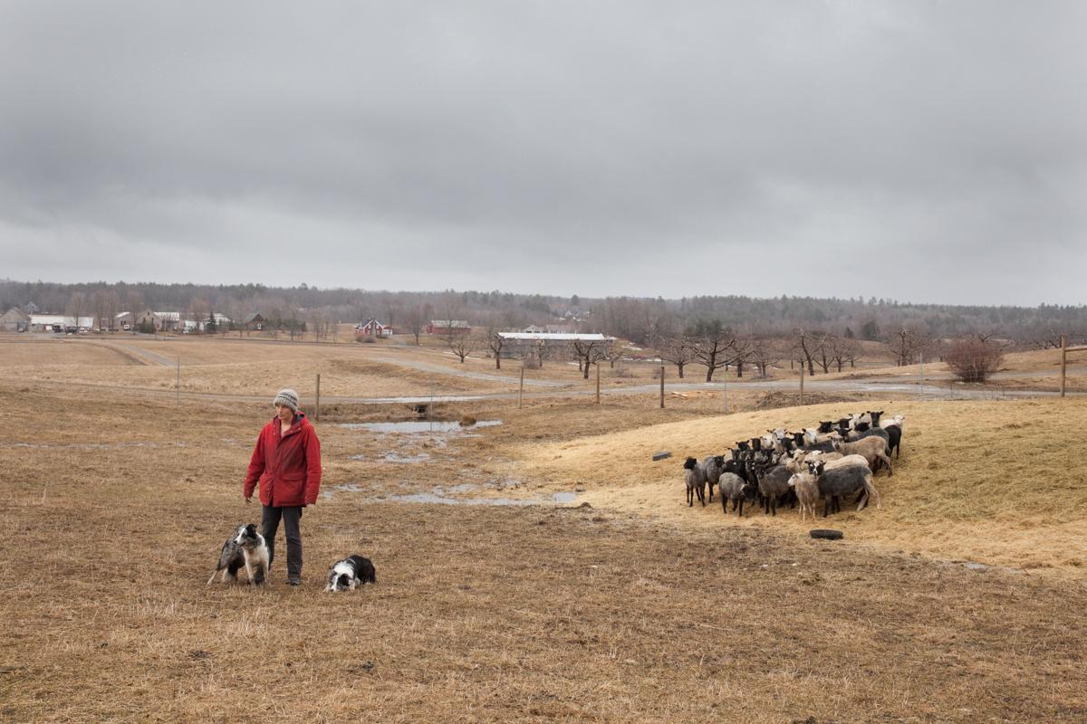 shepherds craft farm