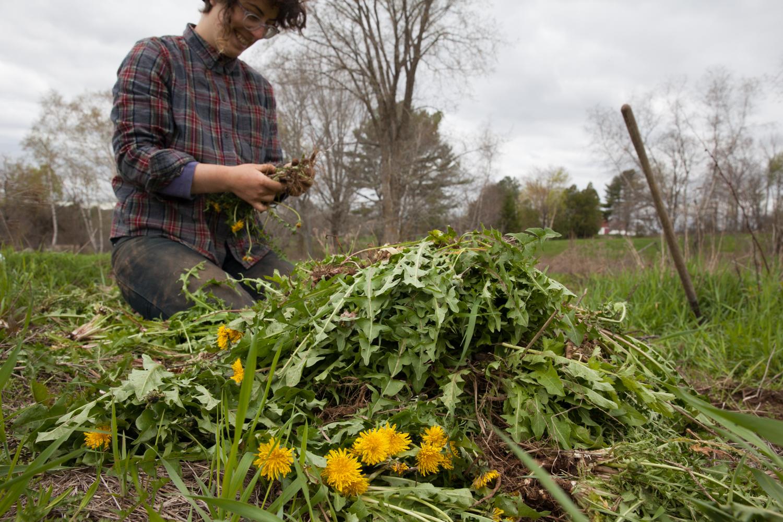 herbal revolution