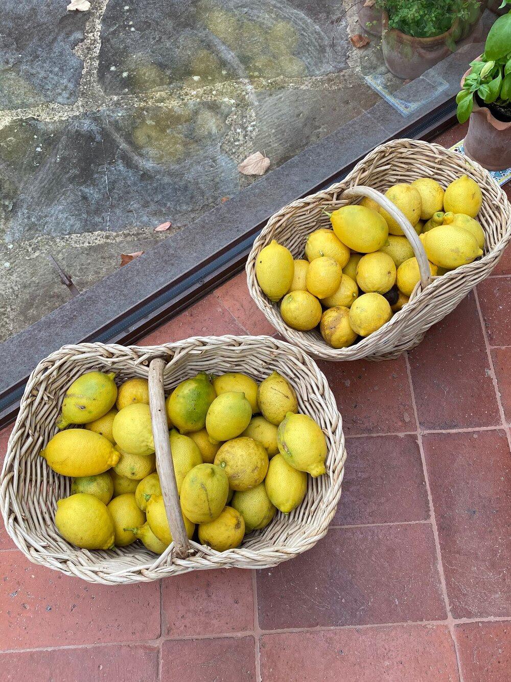 Lemons in baskets.jpg