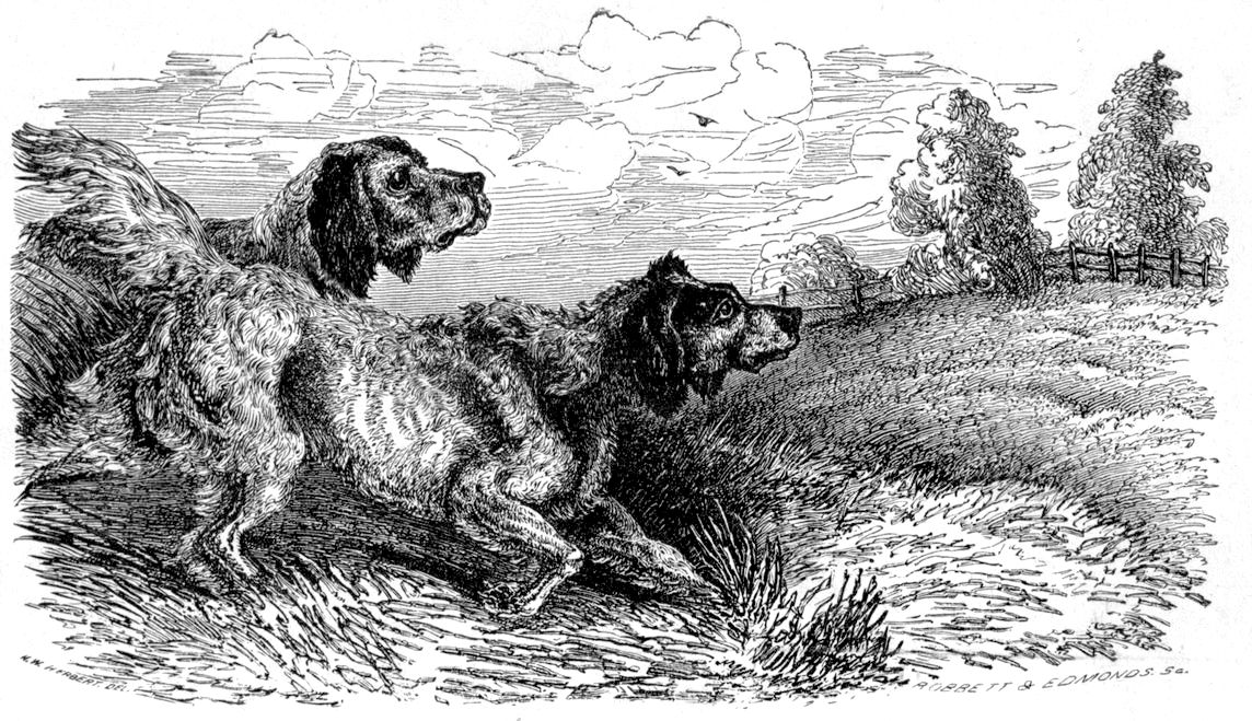 Bob and Dinks from The Book of The Dog, by Dinks, Mayhew, and Hutchinson