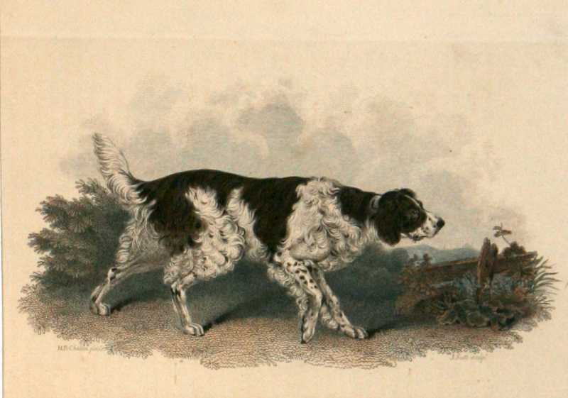 Old English Setter by H. B. Chalon
