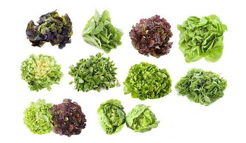 fiche-salades.jpg
