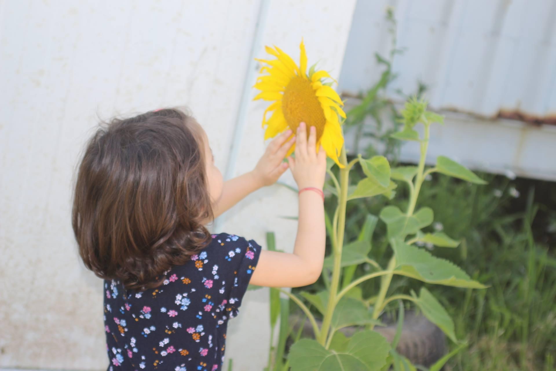 visite pédagogique jardin mélifere 2.jpg