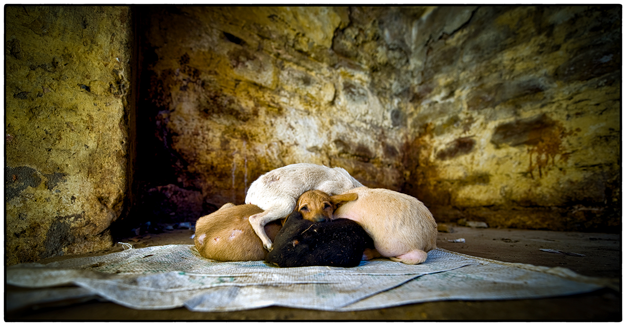 Puppies, Varanasi, India