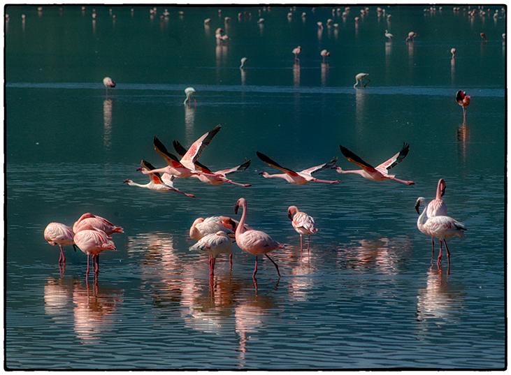 Flamingos, Ngorongoro Crater, Tanzania