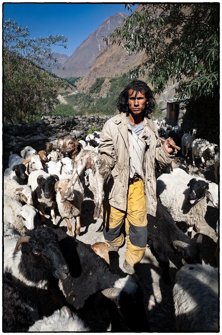Shepherd, Nepal