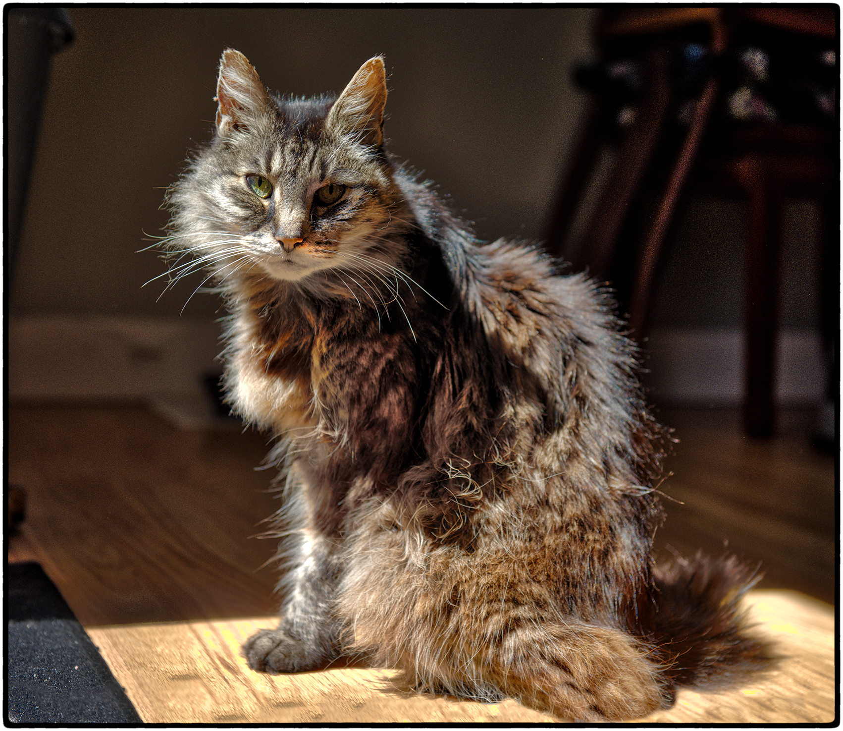 Emerson, our late beloved feline