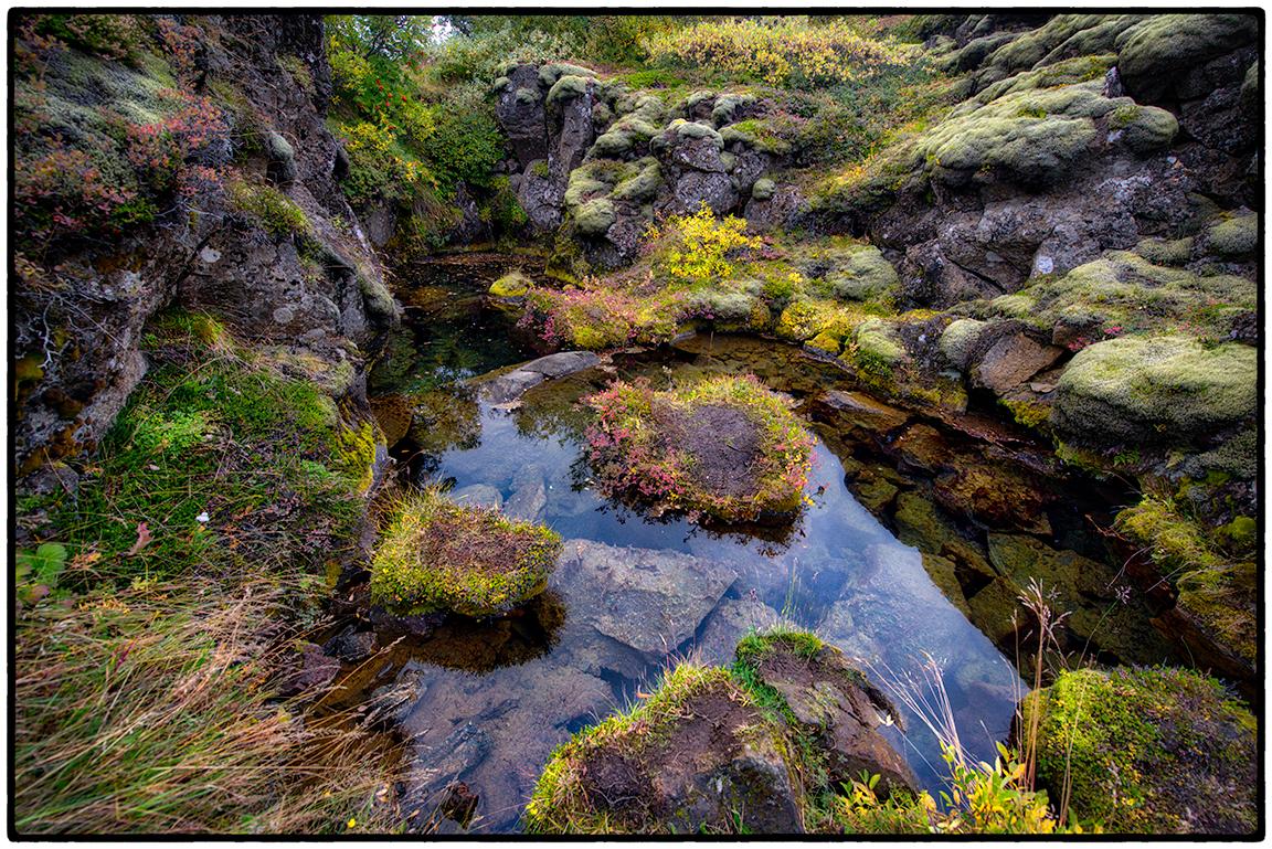 Pond, Moss