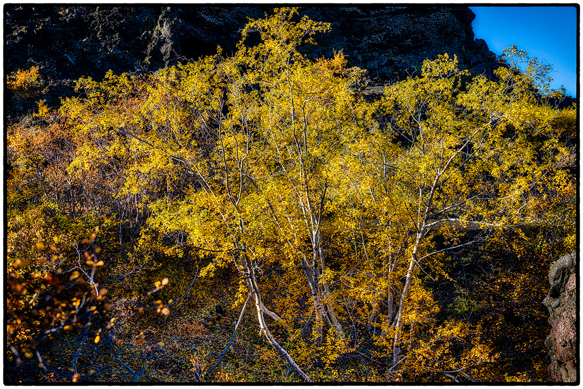 Fall in the Lava Beds 2