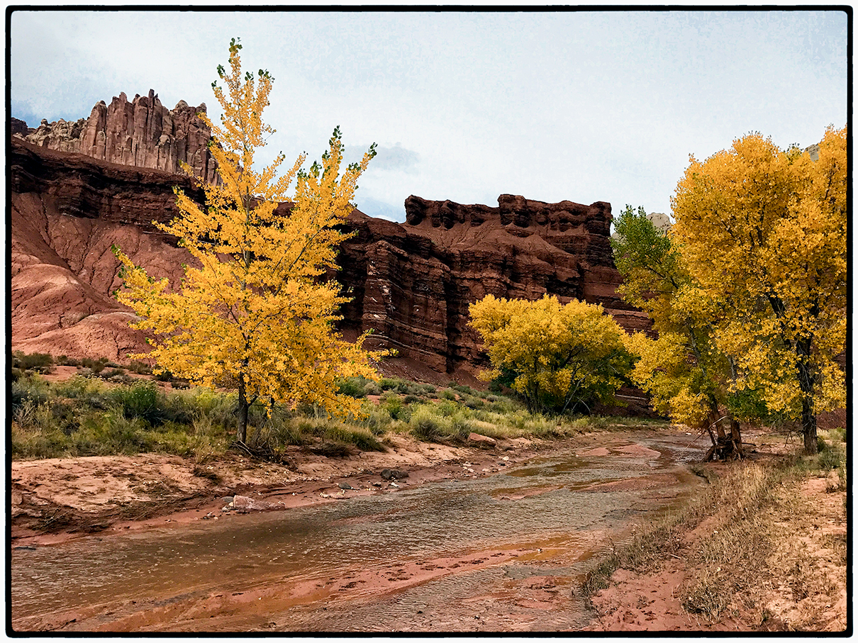 Trees by the Visitor Center, Capitol Reef, Utah