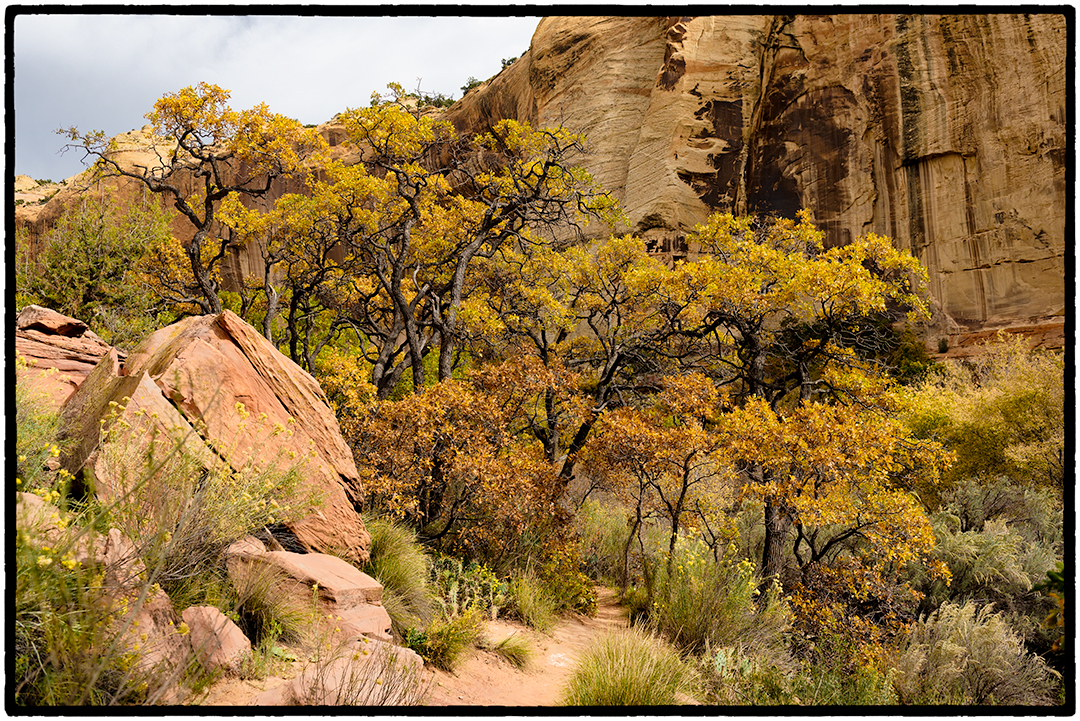 On the 3.75 mile trail to Lower Calf Creek Falls, Escalante National Monument, Utah