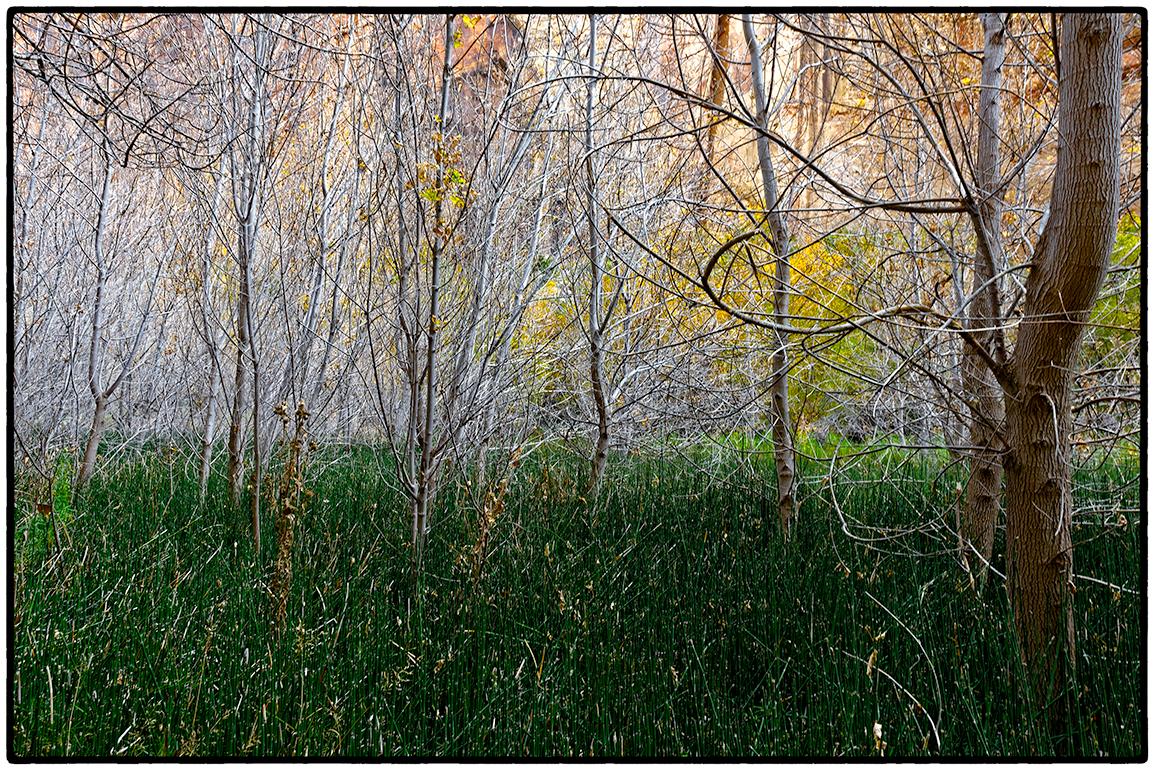 Impenetrable Forest near Lower Calf Creek Falls, Escalante National Monument, Utah