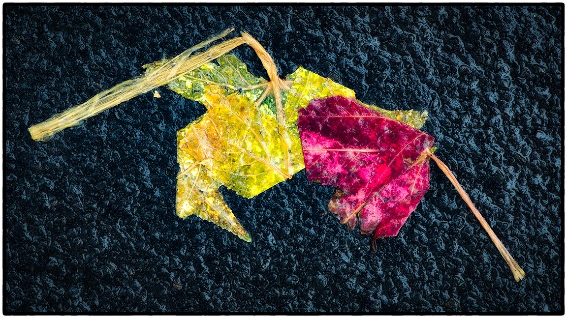 Asphalt-Autumn-1.jpg