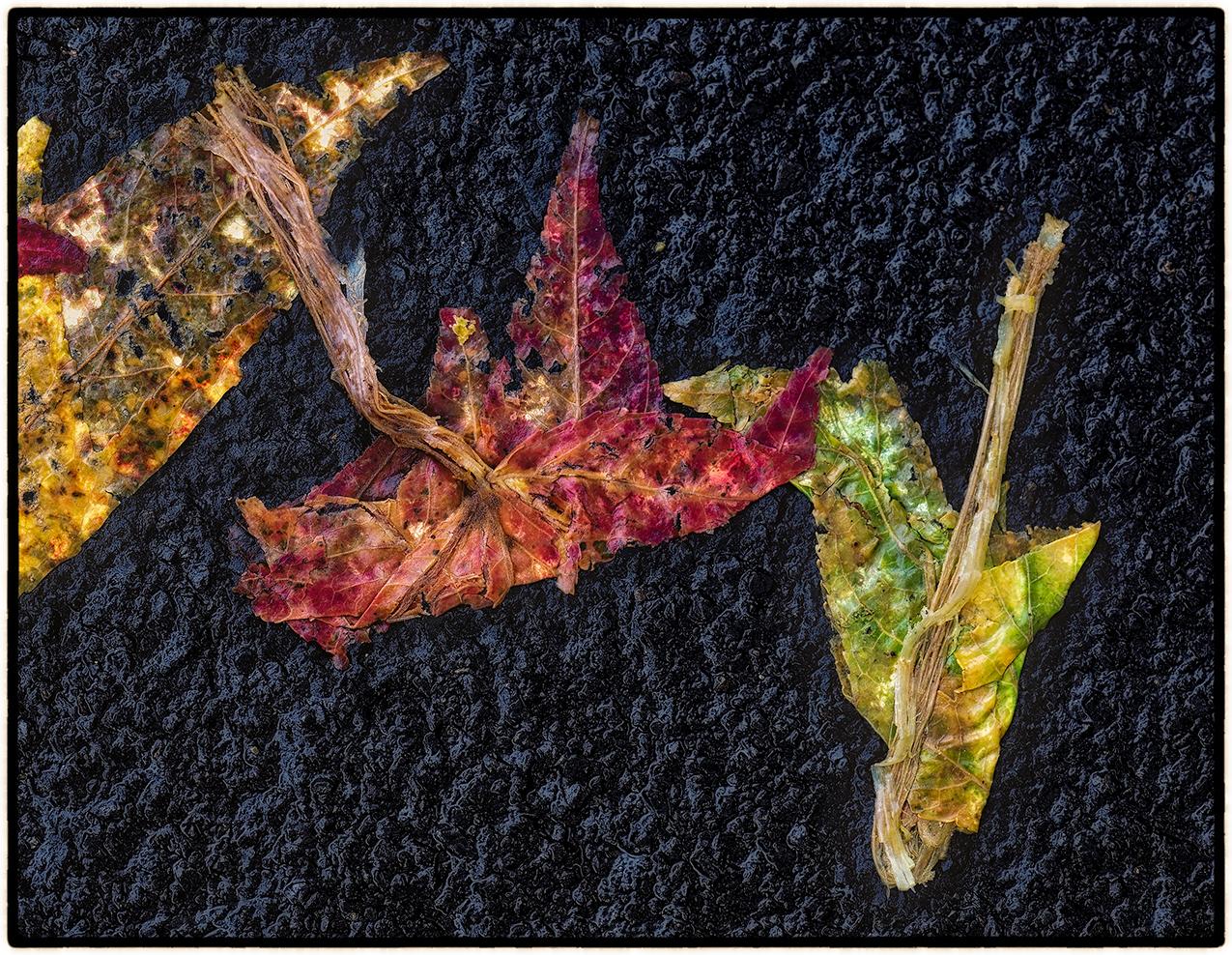 Asphalt-Autumn-2.jpg