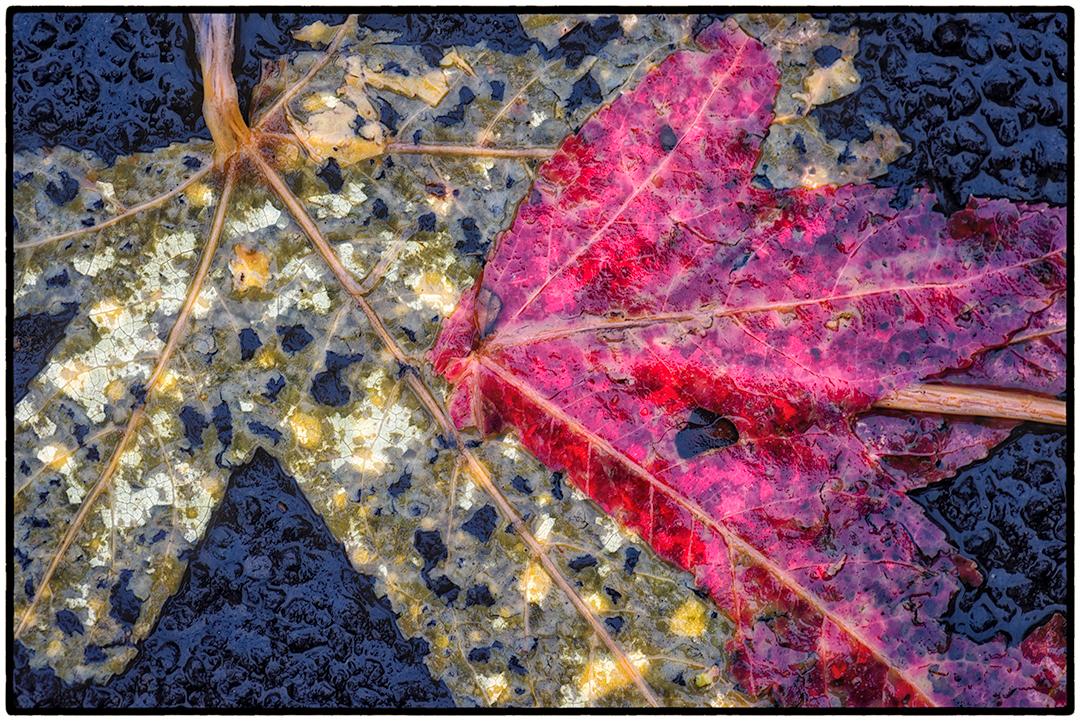 Asphalt-Autumn-4.jpg