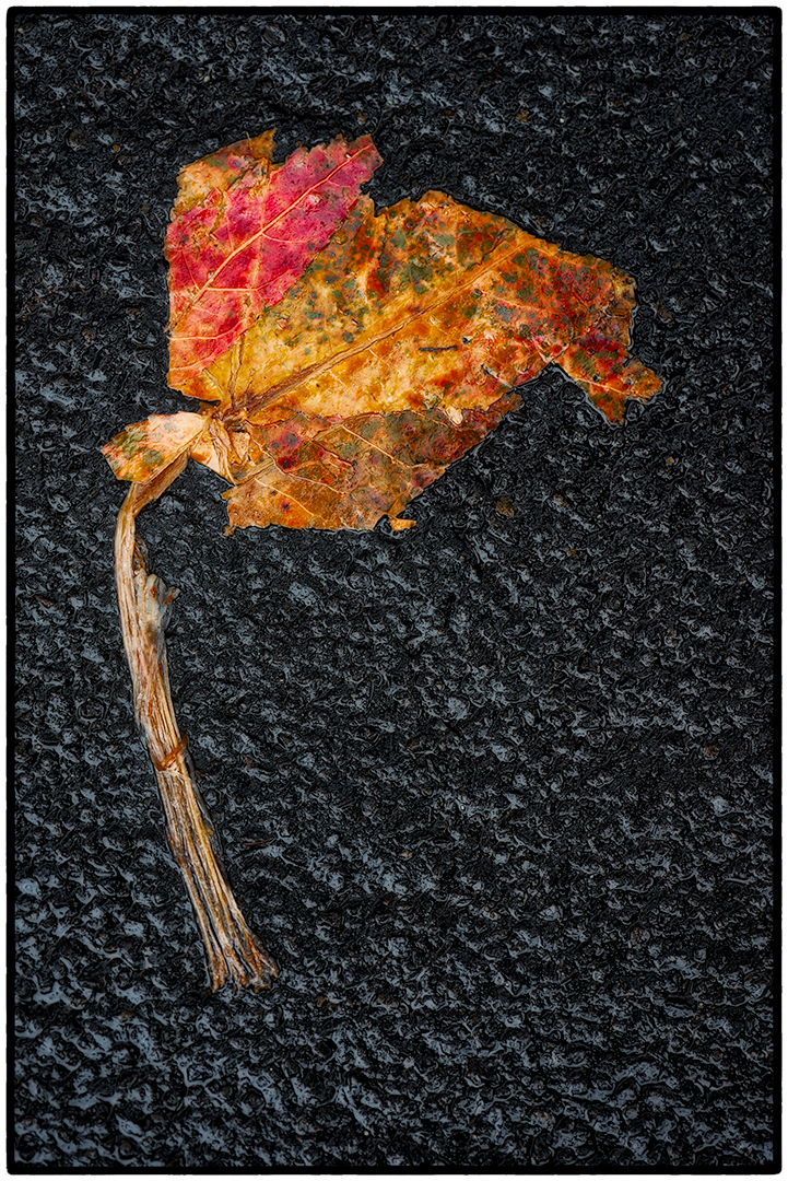 Asphalt-Autumn-7.jpg