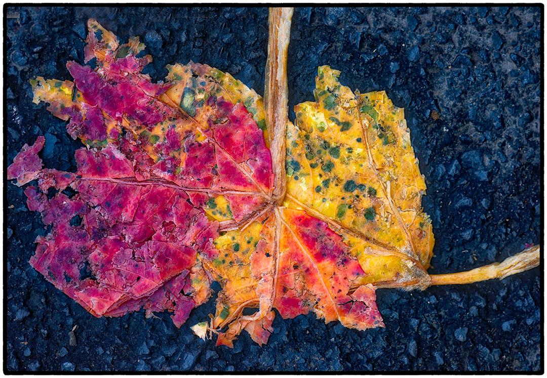 Asphalt-Autumn-8.jpg