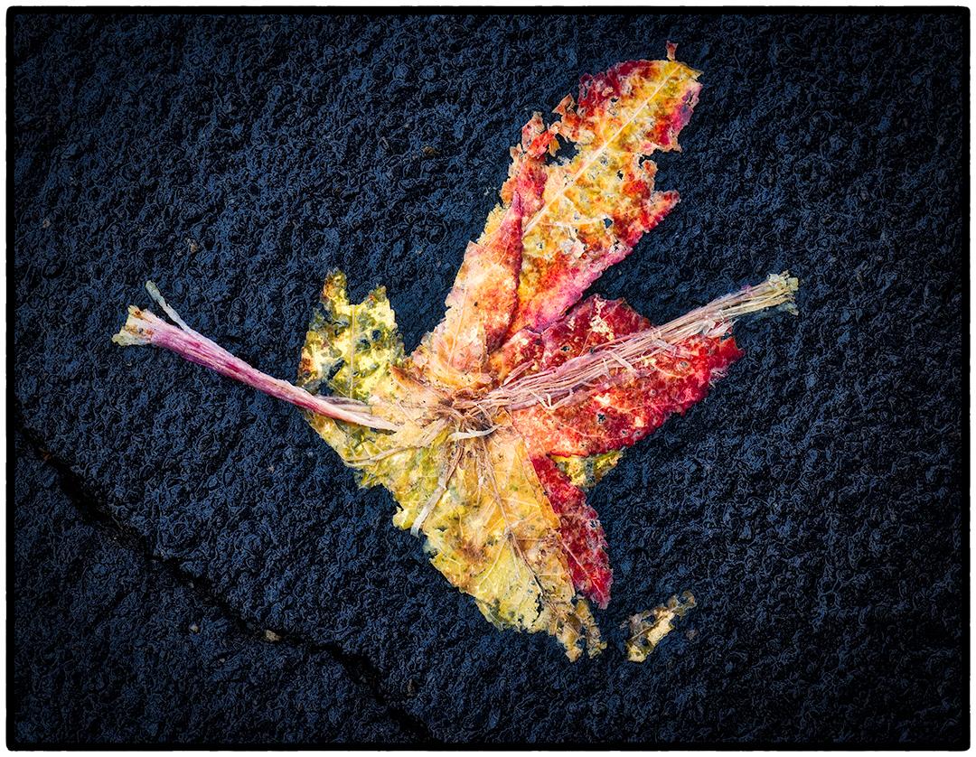 Asphalt-Autumn-9.jpg