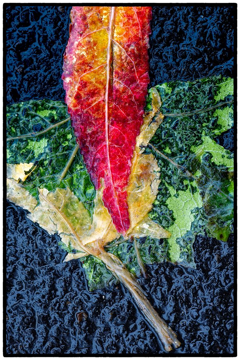 Crushed-leaves-10.jpg