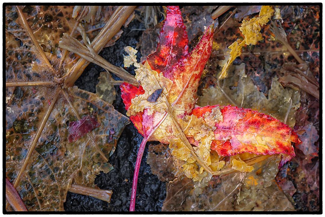 Asphalt-Autumn-11.jpg