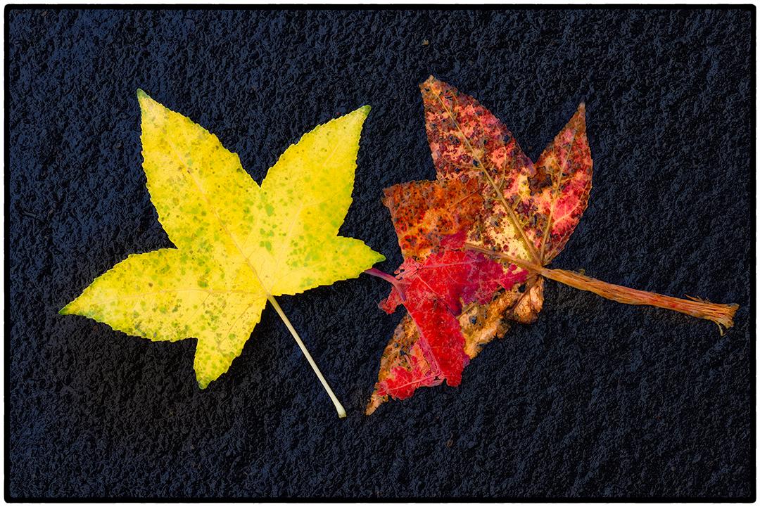 Asphalt-Autumn-13.jpg