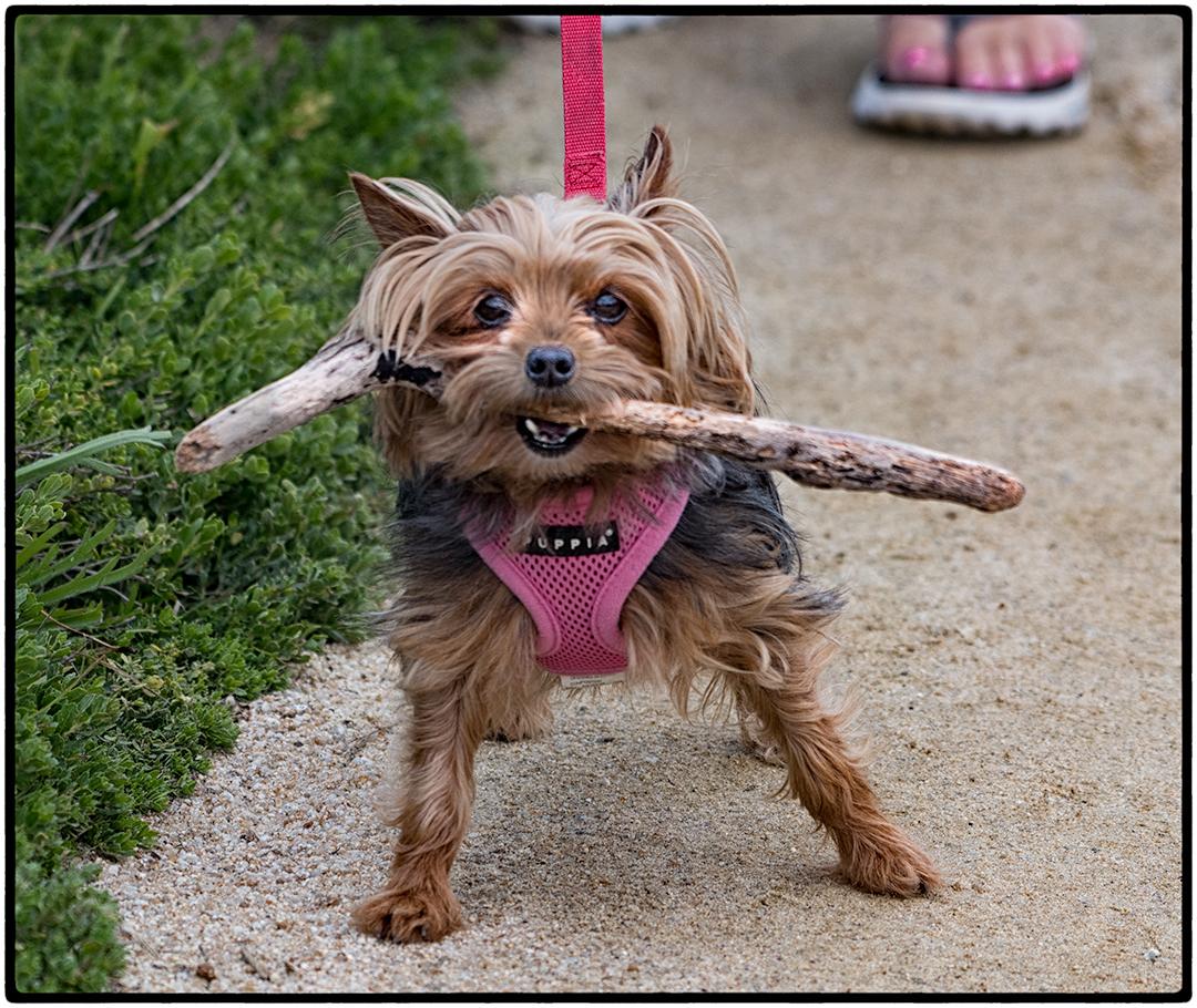 """Lucille"", a hideous creature masquerading as a dog"