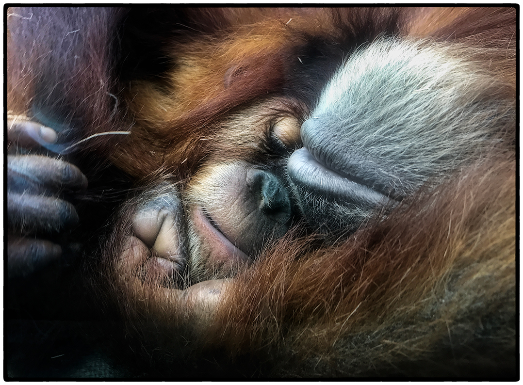 Images from the San Diego Zoo