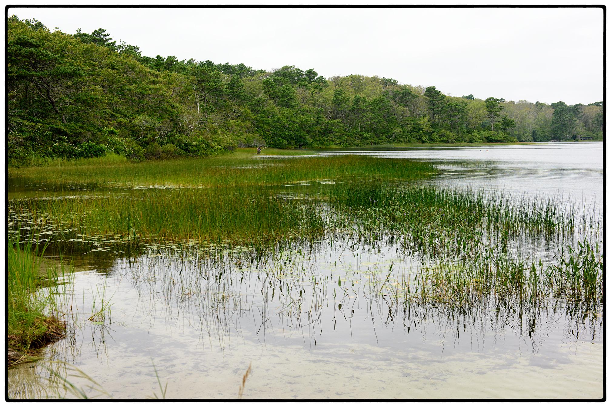 Horseleech Pond