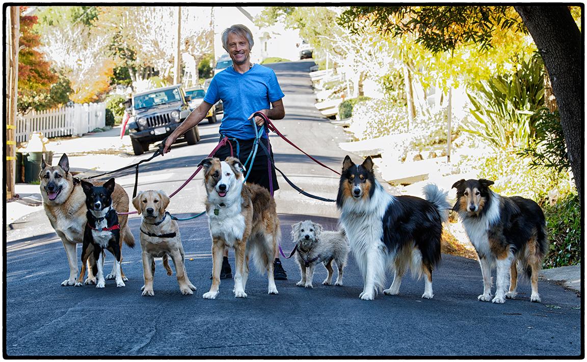 Dog Walker, Kensington, CA