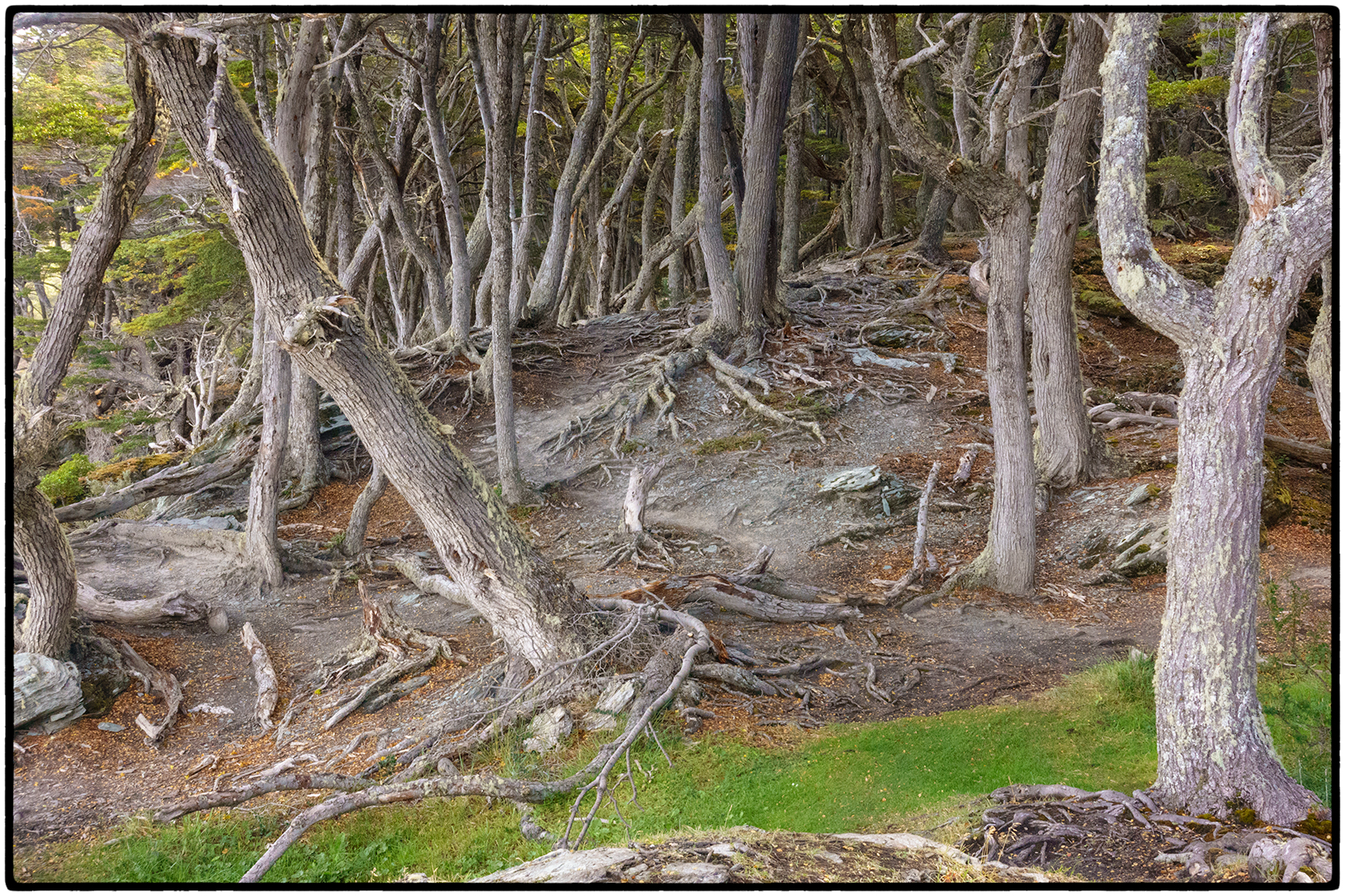 Forest, Ushuaia, Argentina