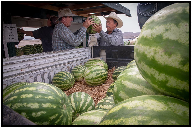 Measuring melons in Green River, Utah