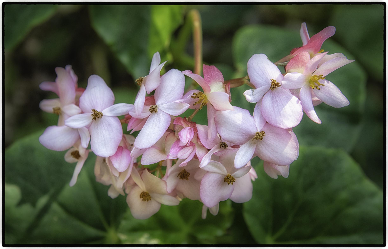 Soroa Orchid Botannical Garden