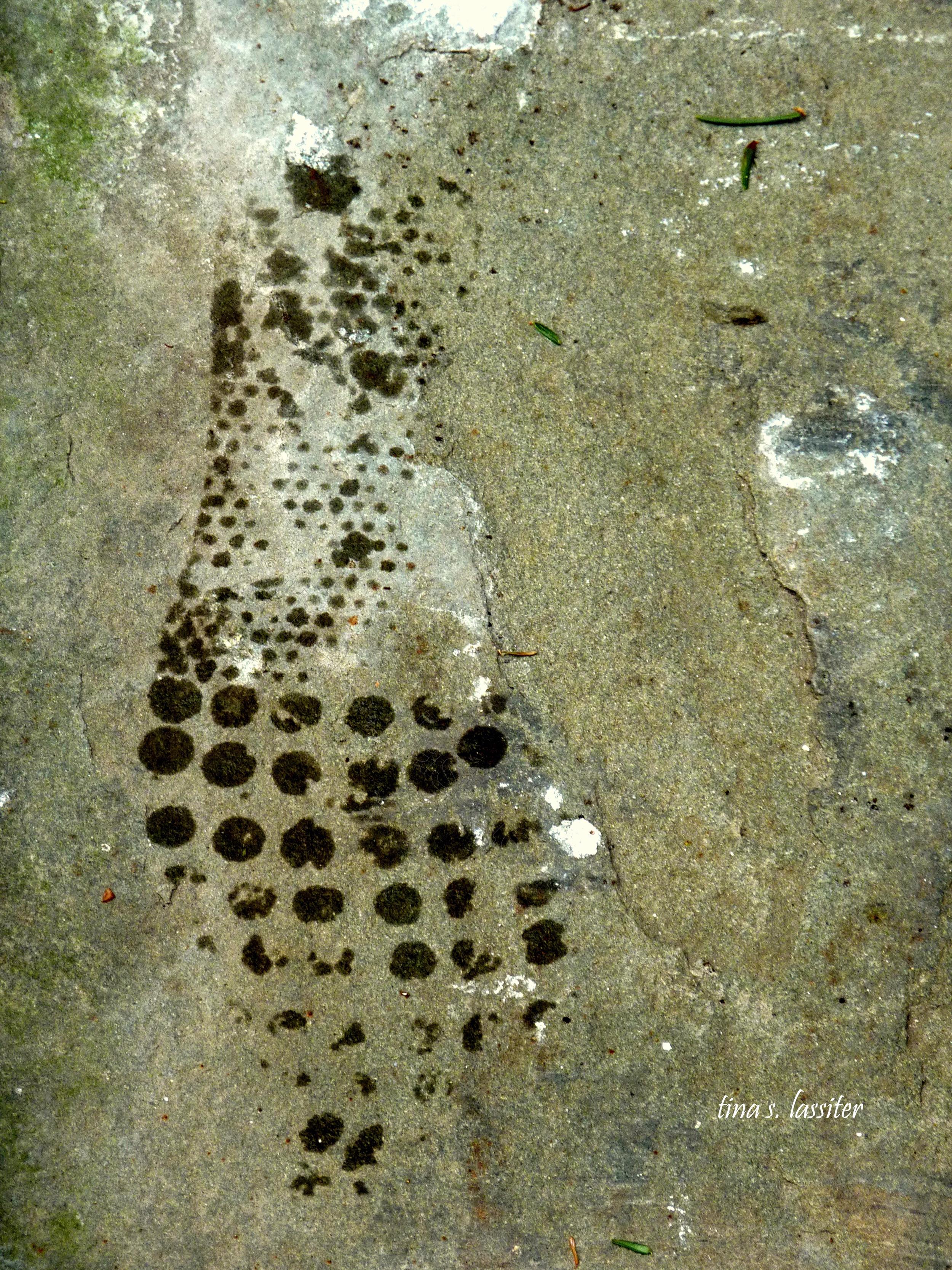 my footprint in the berkshires