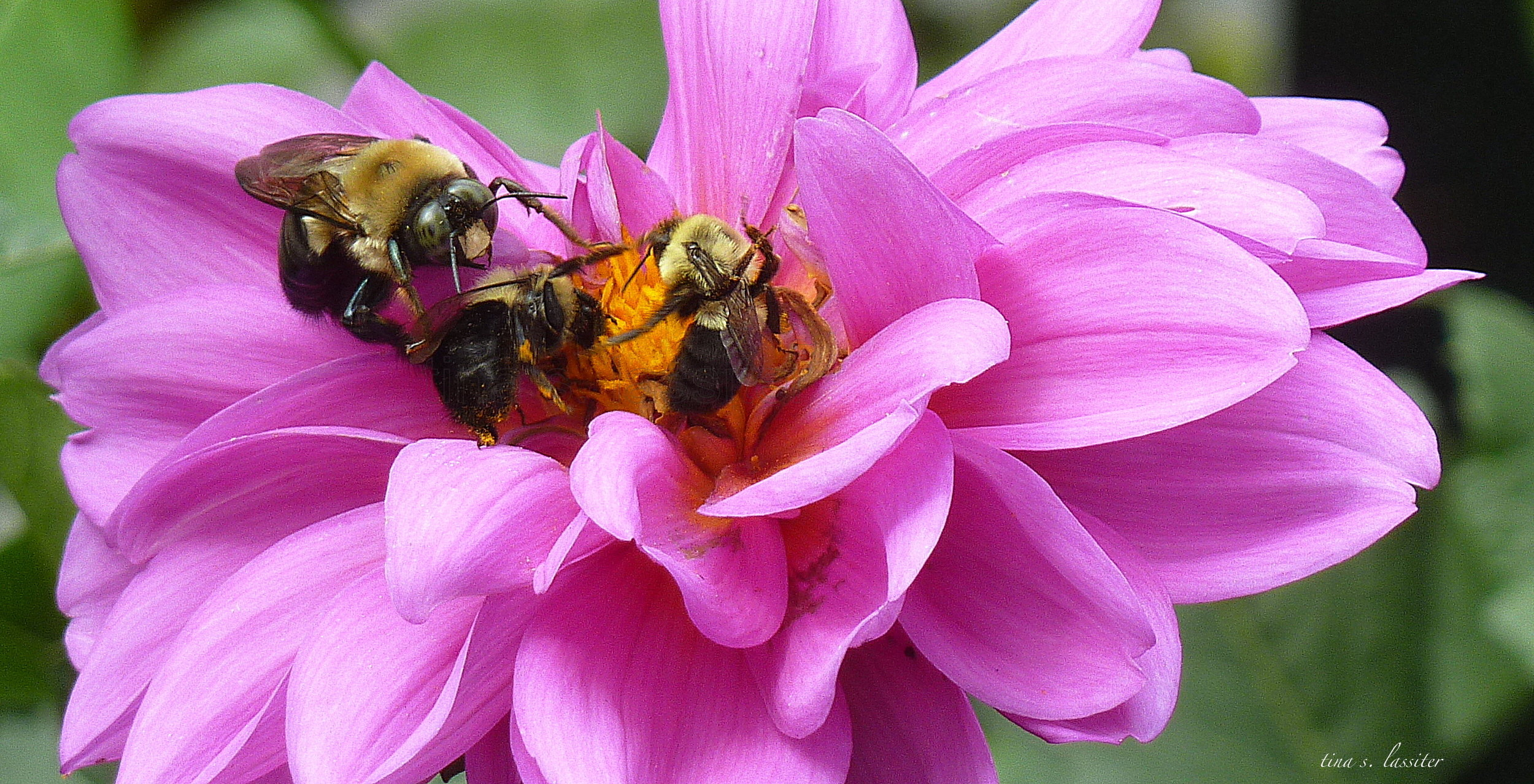 three bee orgy