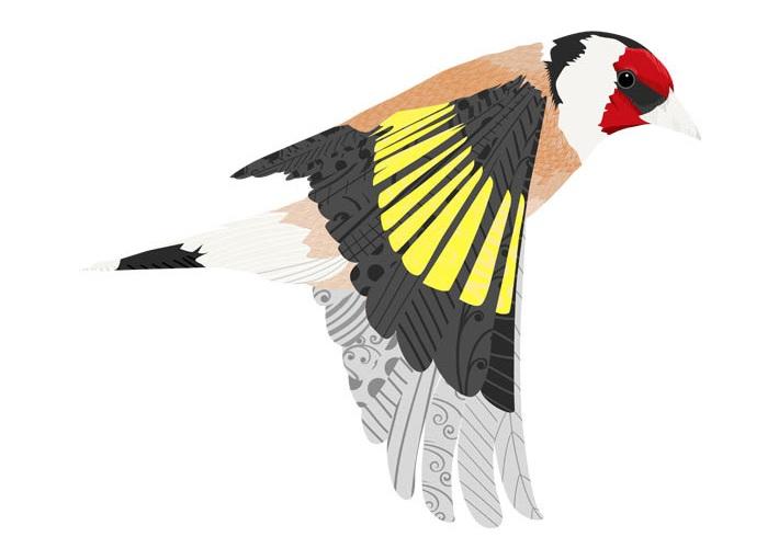 OhhhKaye Illustration-goldfinch.jpg