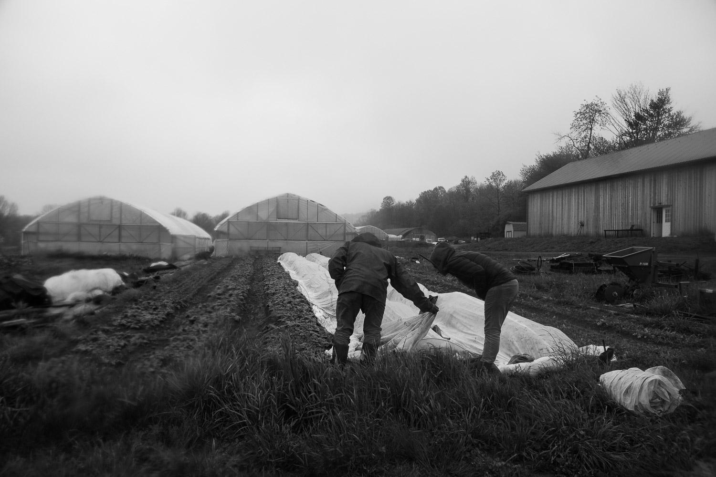 farm photojournalism in hudson valley, ny