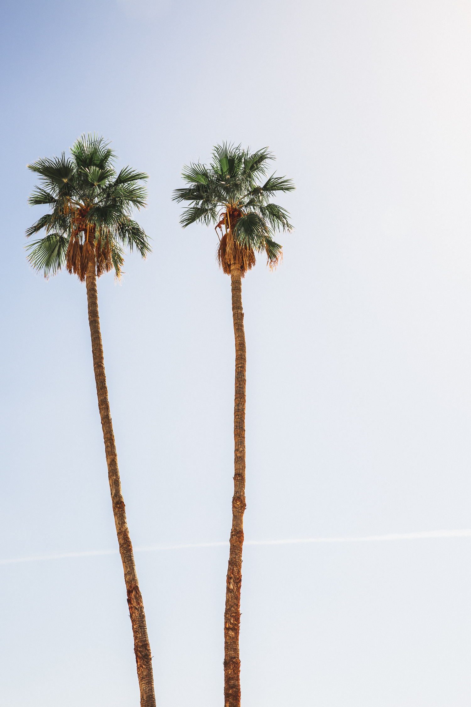 two-palm-trees.jpg