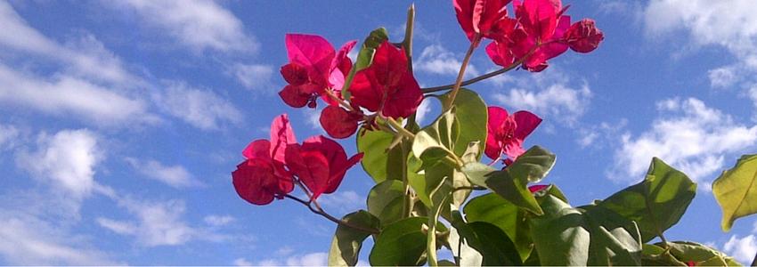 Flowers-Sky.jpg