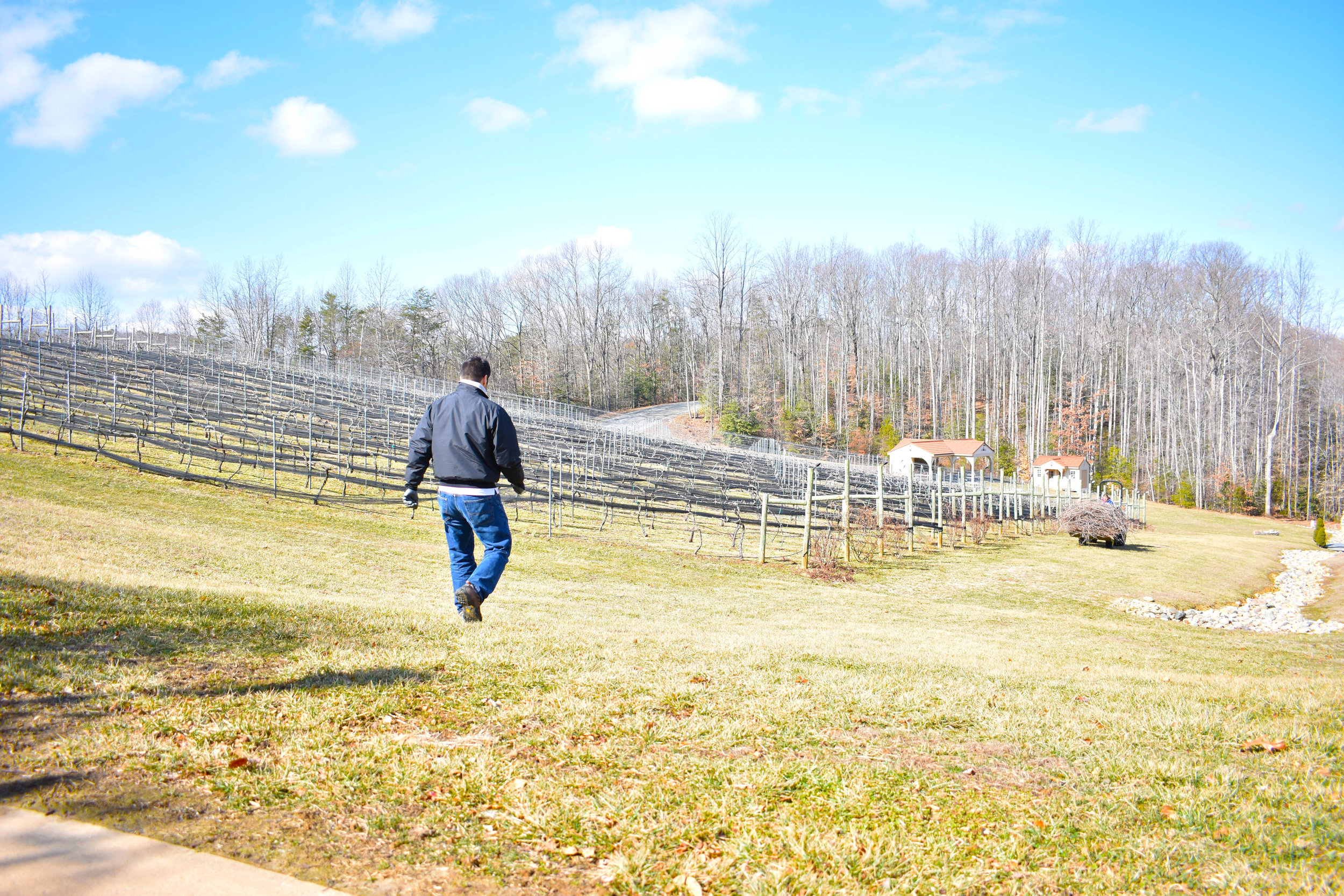 David Pagan Castaño, head winemaker at Potomac Point Vineyard and Winery in Stafford, Va., walks down a hill to greet an employee who is clearing away dead vines, Friday, Feb. 2, 2018. (Lindsey Leake/American University)